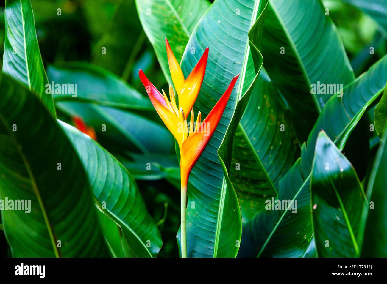 El Jardín Nacional de Orquídeas, los jardines botánicos de Singapur, Singapur, Sudeste de Asia Foto de stock