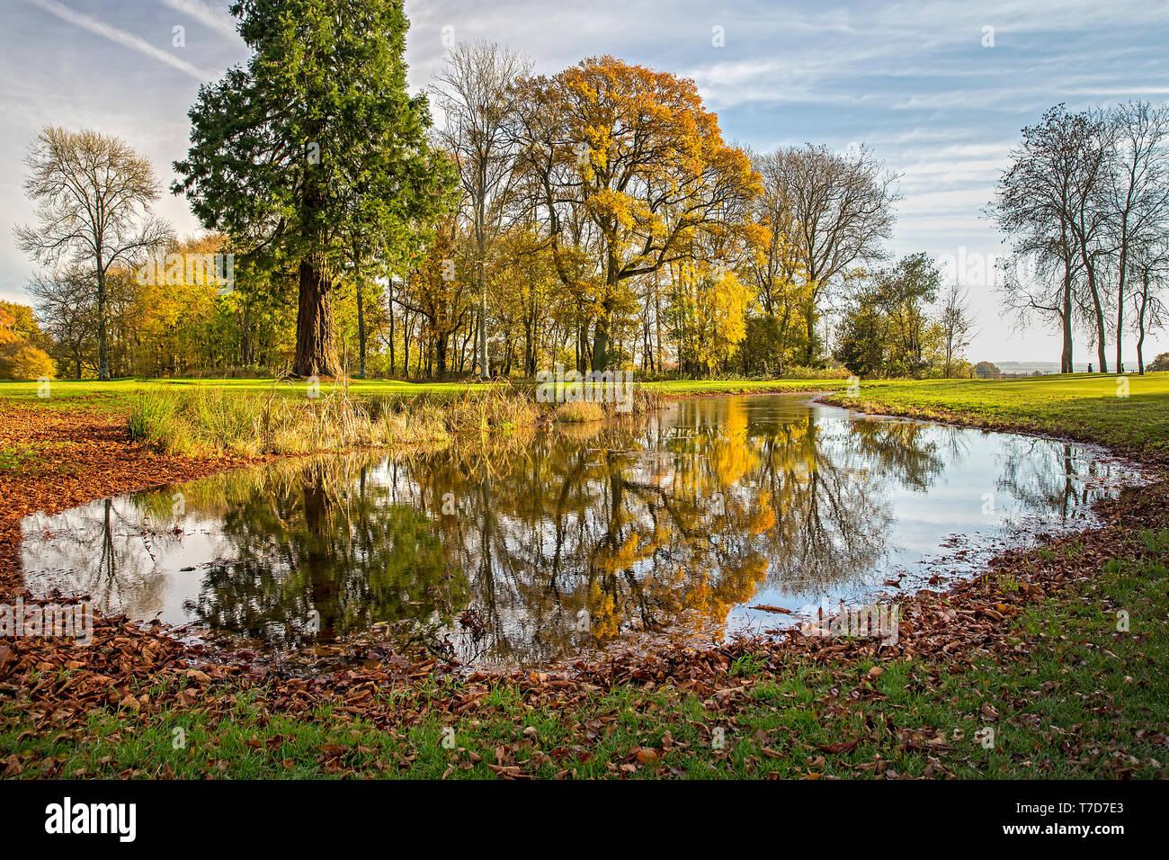 Rushmore Park Golf Club en otoño. Wiltshire, Reino Unido. Foto de stock