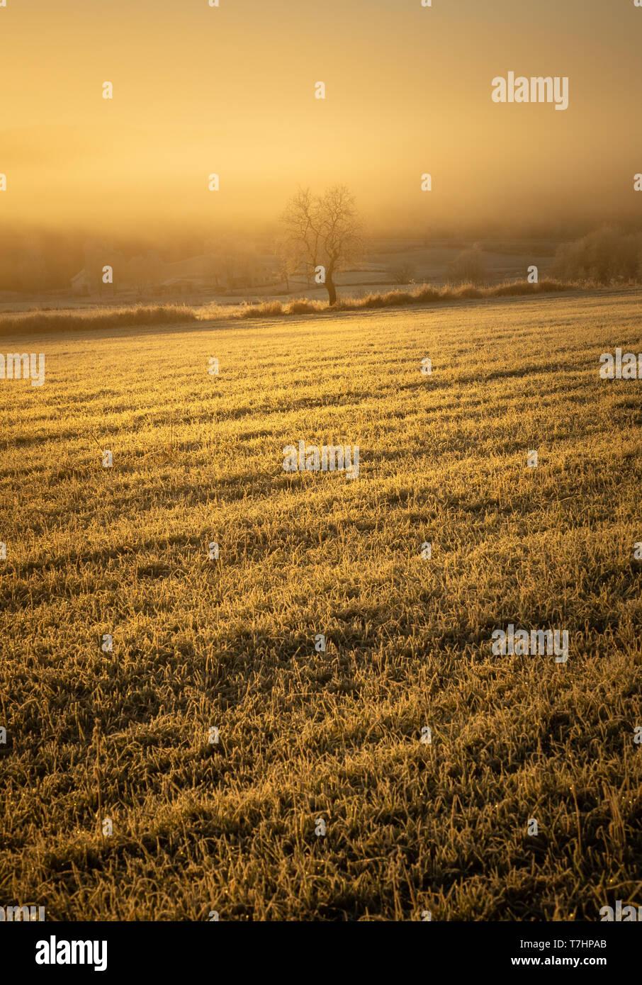 Solo árbol en los campos congelados. El paisaje de las zonas rurales próximas Jonsvatnet, Trondheim, Noruega. La luz naranja de la tarde. Foto de stock