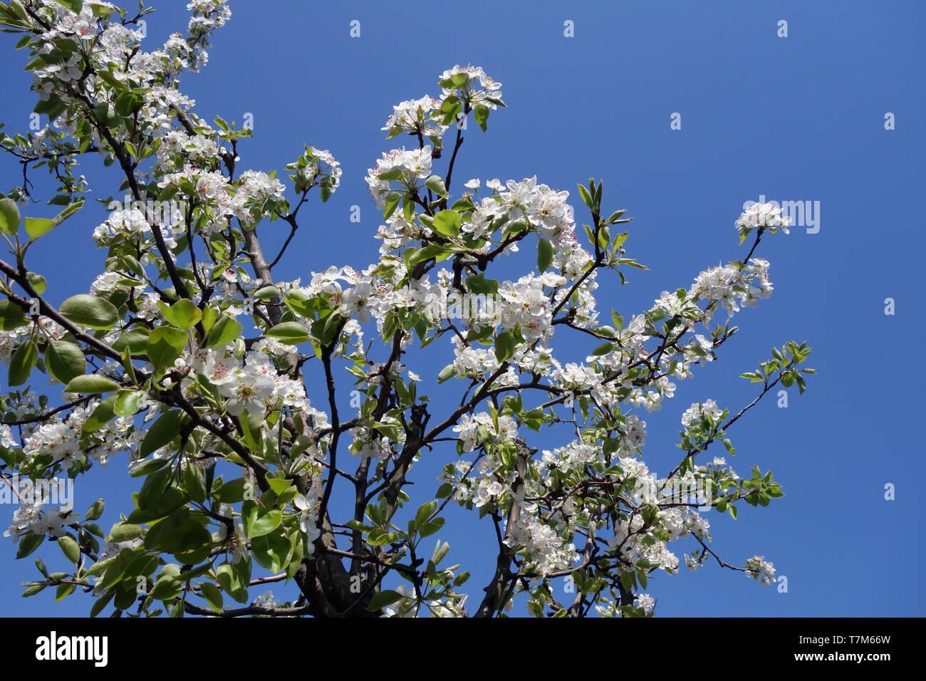 De abril de 2019, el blooming flower meses, cuando la sinfonía de colores y perfumes que disfrutamos cada día Imagen De Stock