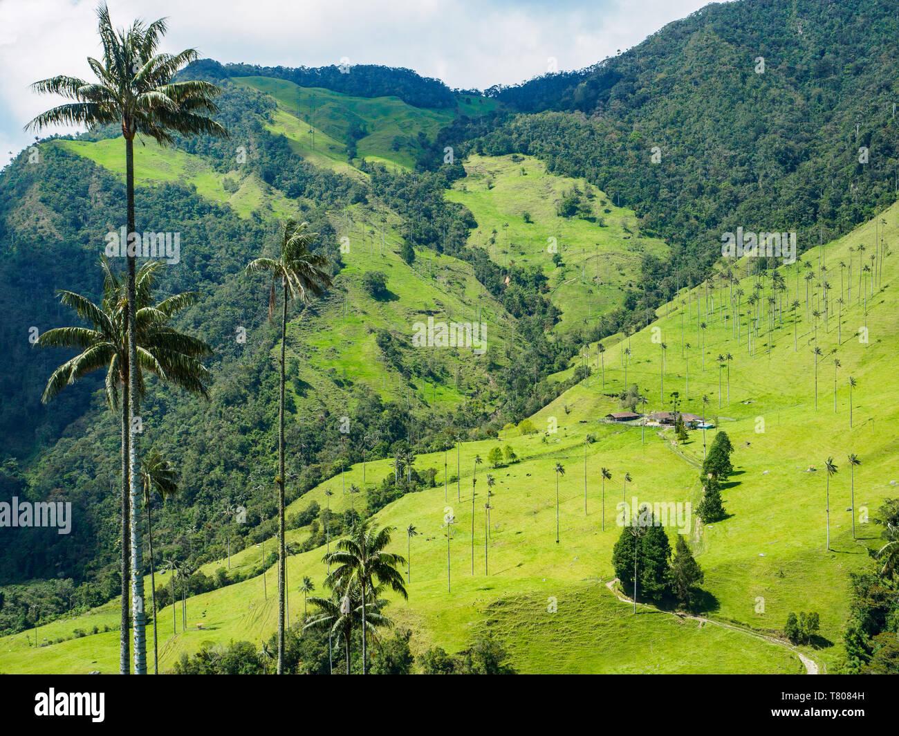 Valle de Corcora, cerca de Salento, Colombia, Sur America Foto de stock
