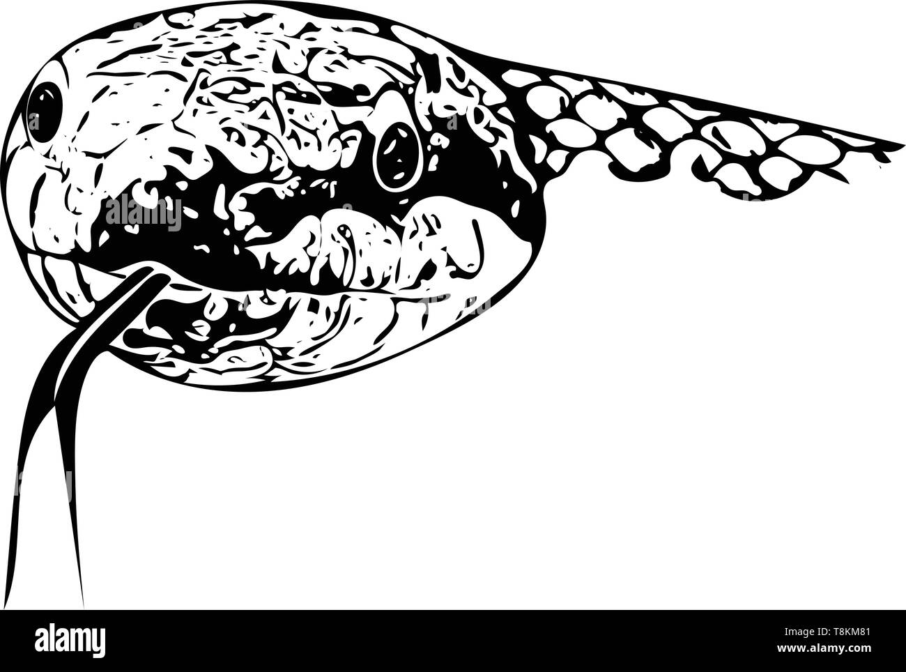 Equipo dibujado monocromo ilustración de la cabeza de una Serpiente de cabeza con la lengua tendida en blanco. Imagen De Stock