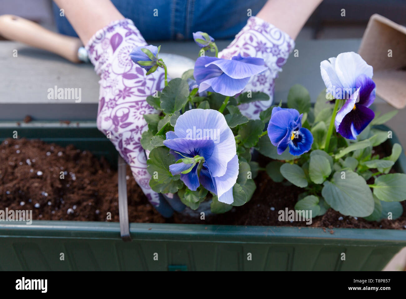 Jardineros Manos Plantar Flores En Maceta Con Tierra O Suelo