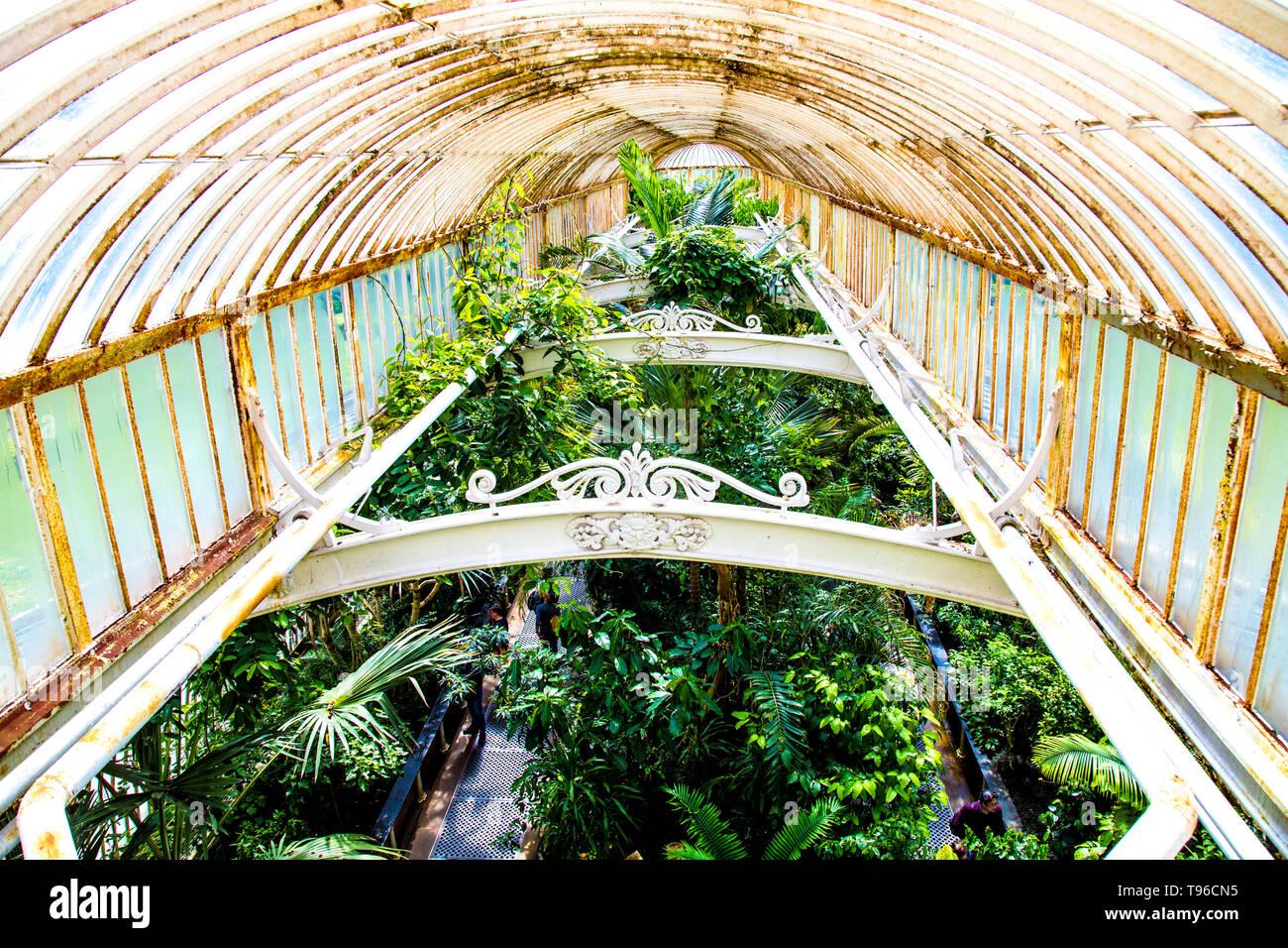 Interior de la Casa de las palmeras con tops de plantas exóticas, Kew Gardens, Londres, Reino Unido. Foto de stock