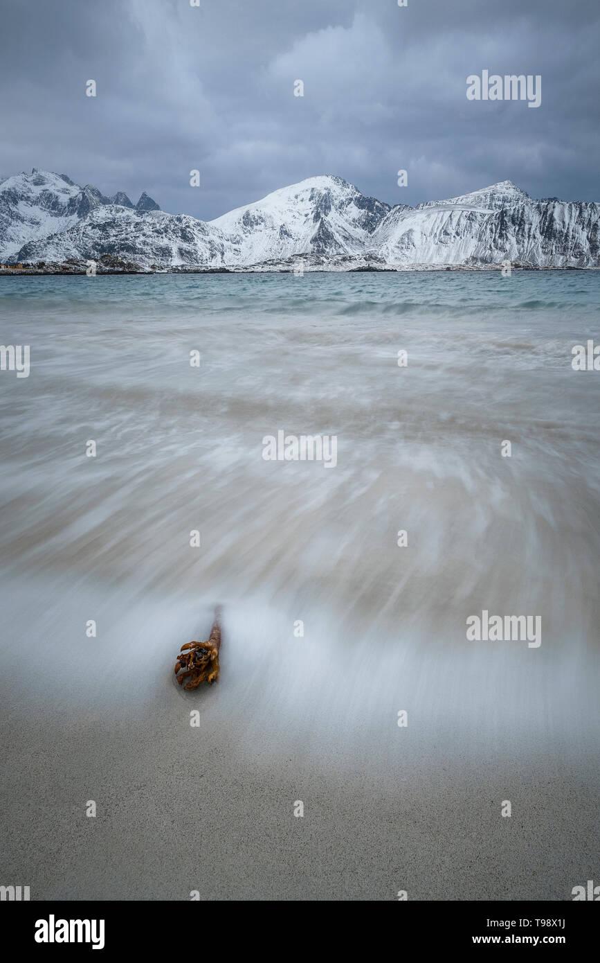 Olas lavado alrededor de una rama delante de montañas cubiertas de nieve en la playa de Ramberg, Lofoten, Noruega Foto de stock