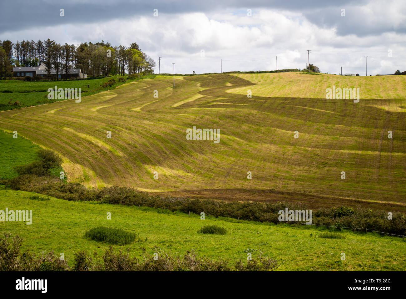 Castlehaven, West Cork, Irlanda, 19 de mayo de 2019, los patrones de rayas oscuras en un campo agrícola son el resultado de estiércol líquido después del ensilaje ha sido cortado. La agricultura Irelands es su principal contribuyente a las emisiones de gases de efecto invernadero. Crédito/ aphperspective Alamy Live News Foto de stock
