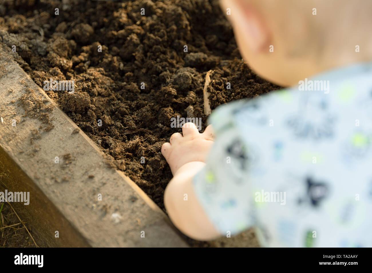Niño sembrando plántulas de tomate en invernadero. La Jardinería orgánica y concepto de crecimiento Foto de stock