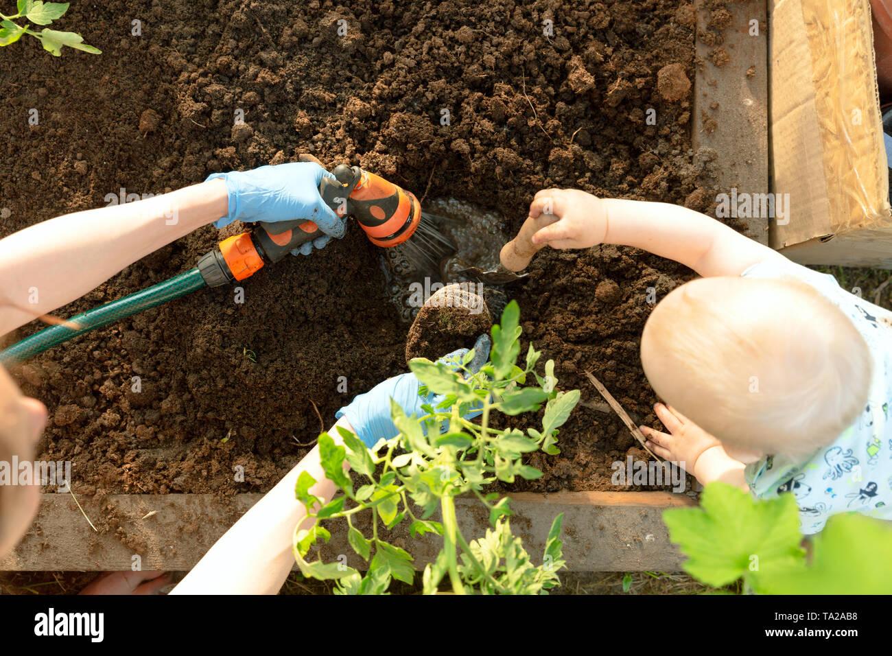 Manos de mujer y un niño sembrando plántulas de tomate en invernadero. La Jardinería orgánica y concepto de crecimiento Foto de stock