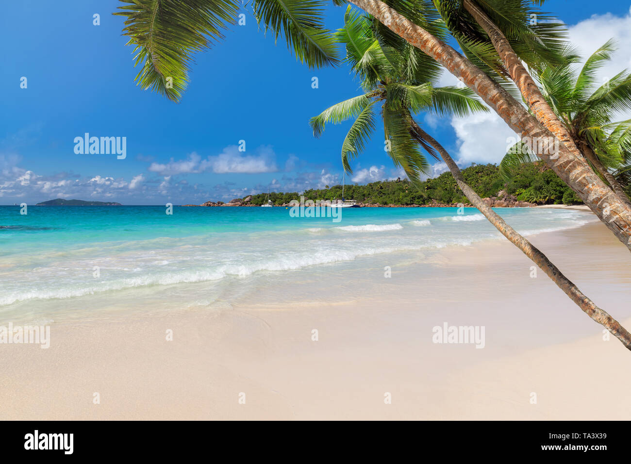 Las palmas de coco en la playa en una isla tropical. Foto de stock