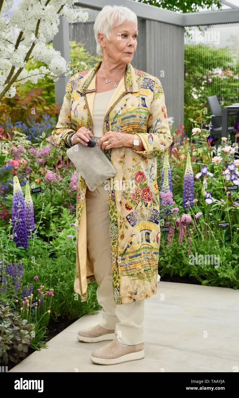 Dame Judi Dench se presentó con un retoño olmo para lanzar la re-elming de la campiña británica a partir de este año. Hillier viveros, RHS Chelsea Flower Show de Londres Foto de stock