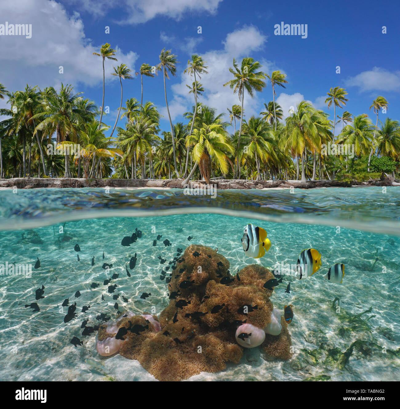 Costa Tropical con las anémonas de mar y peces bajo el agua, Tikehau atoll, Tuamotu, en la Polinesia francesa, Océano Pacífico, vista dividida por encima y por debajo de la superficie del agua Foto de stock