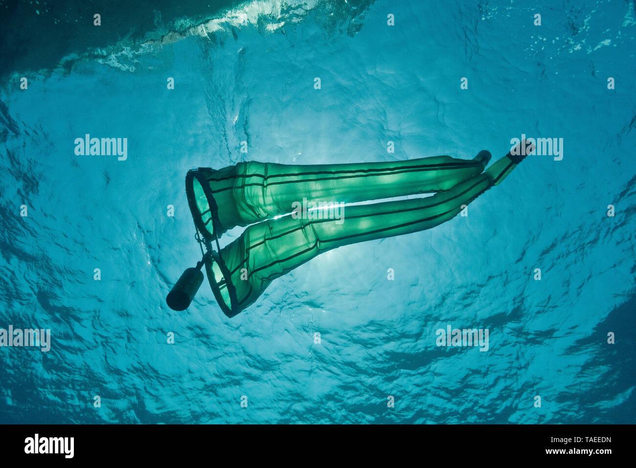 Tara Oceans Expeditions - Mayo de 2011. Agregación Salp conteniendo pequeños camarones (simbiosis?). Un salps salp (plural) o salpa (plural salpae o salpas) es una forma de tonel, tunicate planctónicas. Se mueve por la contratación, por lo tanto, el bombeo de agua a través de su gelatinoso cuerpo. Las cepas salp el agua bombeada a través de sus filtros de alimentación interna, alimentándose de fitoplancton. Salps son comunes en ecuatorial, templado, y mares fríos, donde pueden verse en la superficie, de forma individual o en colonias de largas y delgadas. La m Foto de stock