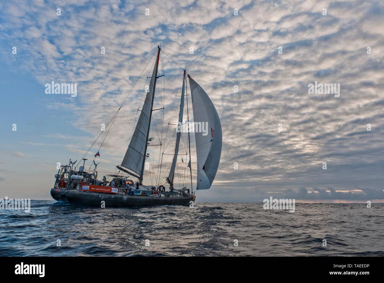 Tara Oceans Expeditions - Mayo de 2011. Velero Tara; Guayaquil-Galapagos pierna; Ecuador Foto de stock