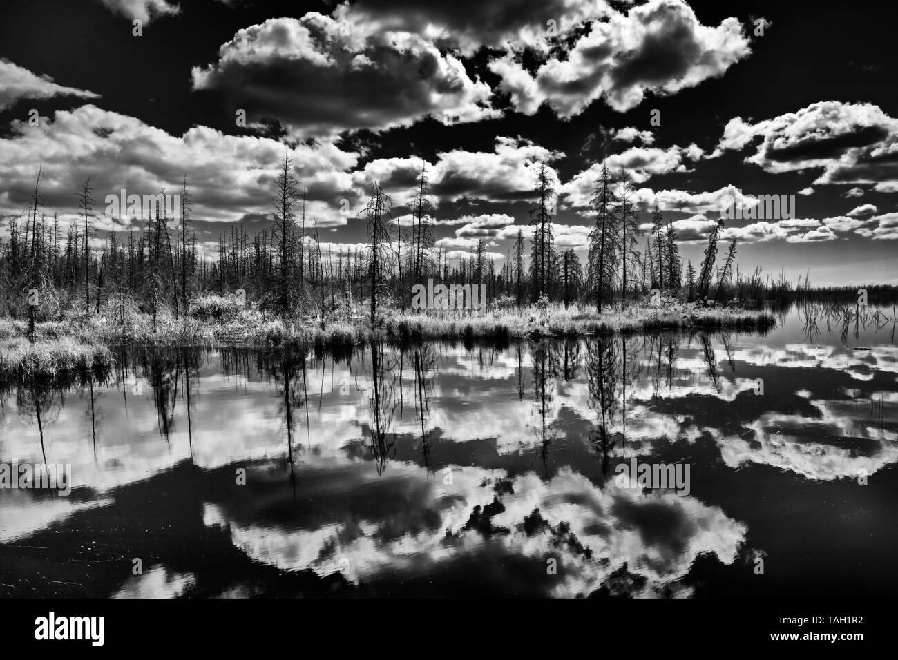 Las nubes y el bosque boreal reflejada en pantanos cerca de Yellowknife Territorios del Noroeste de Canadá Foto de stock