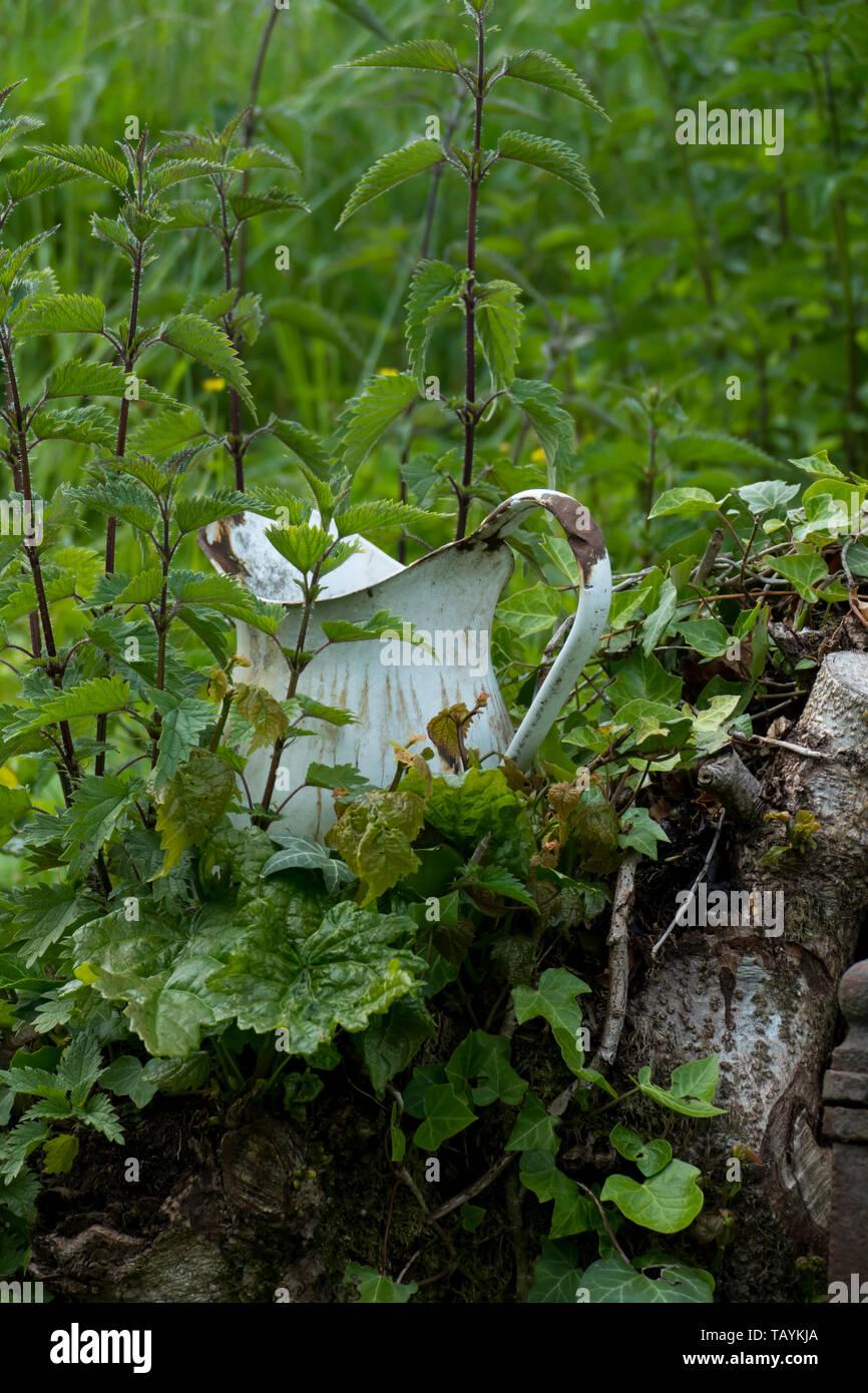 Ein alter Krug , Kanne aus email von Brennesseln überwuchert, bewachsen Foto de stock