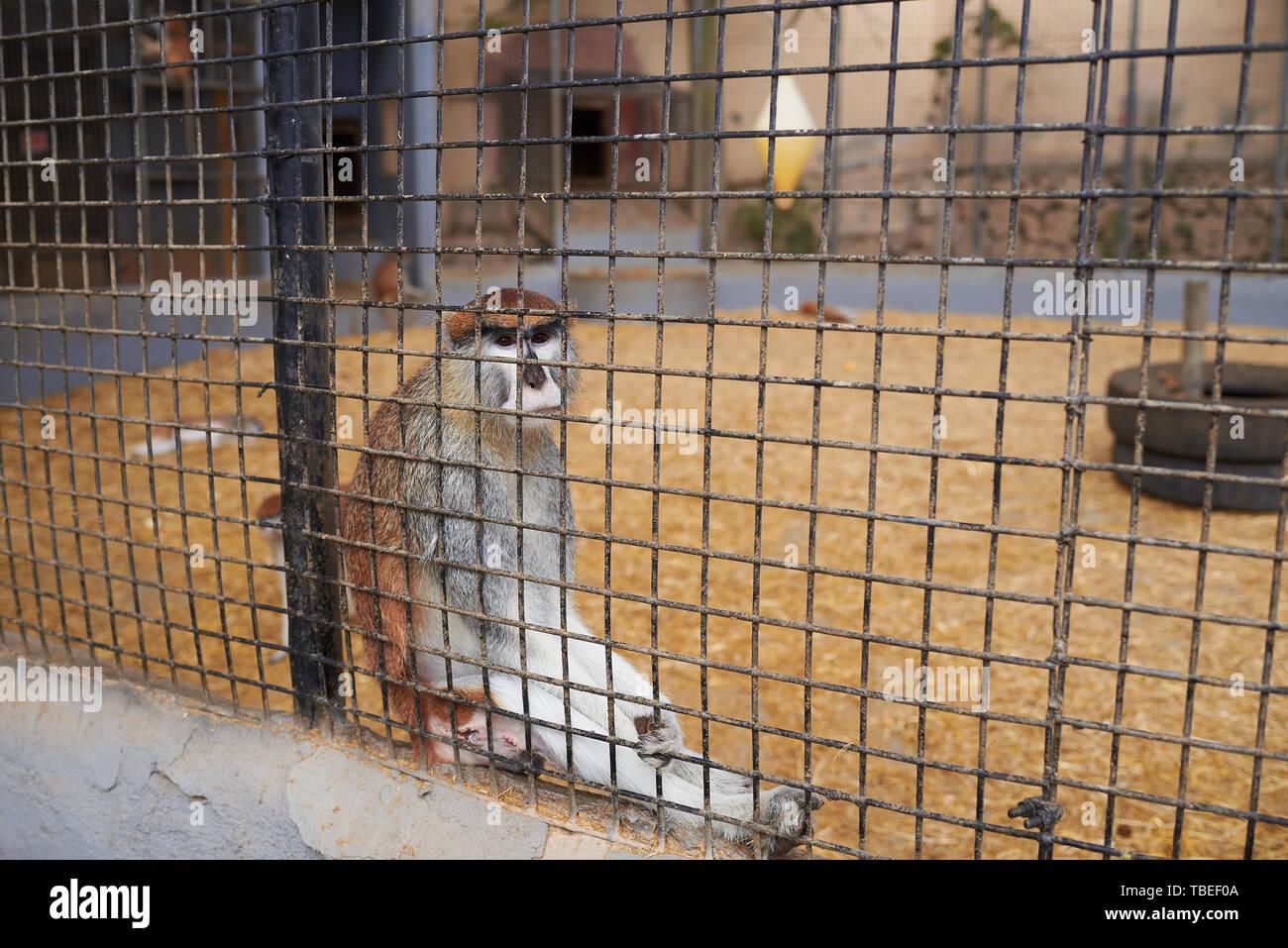 Mono enjaulado en un zoológico Foto de stock