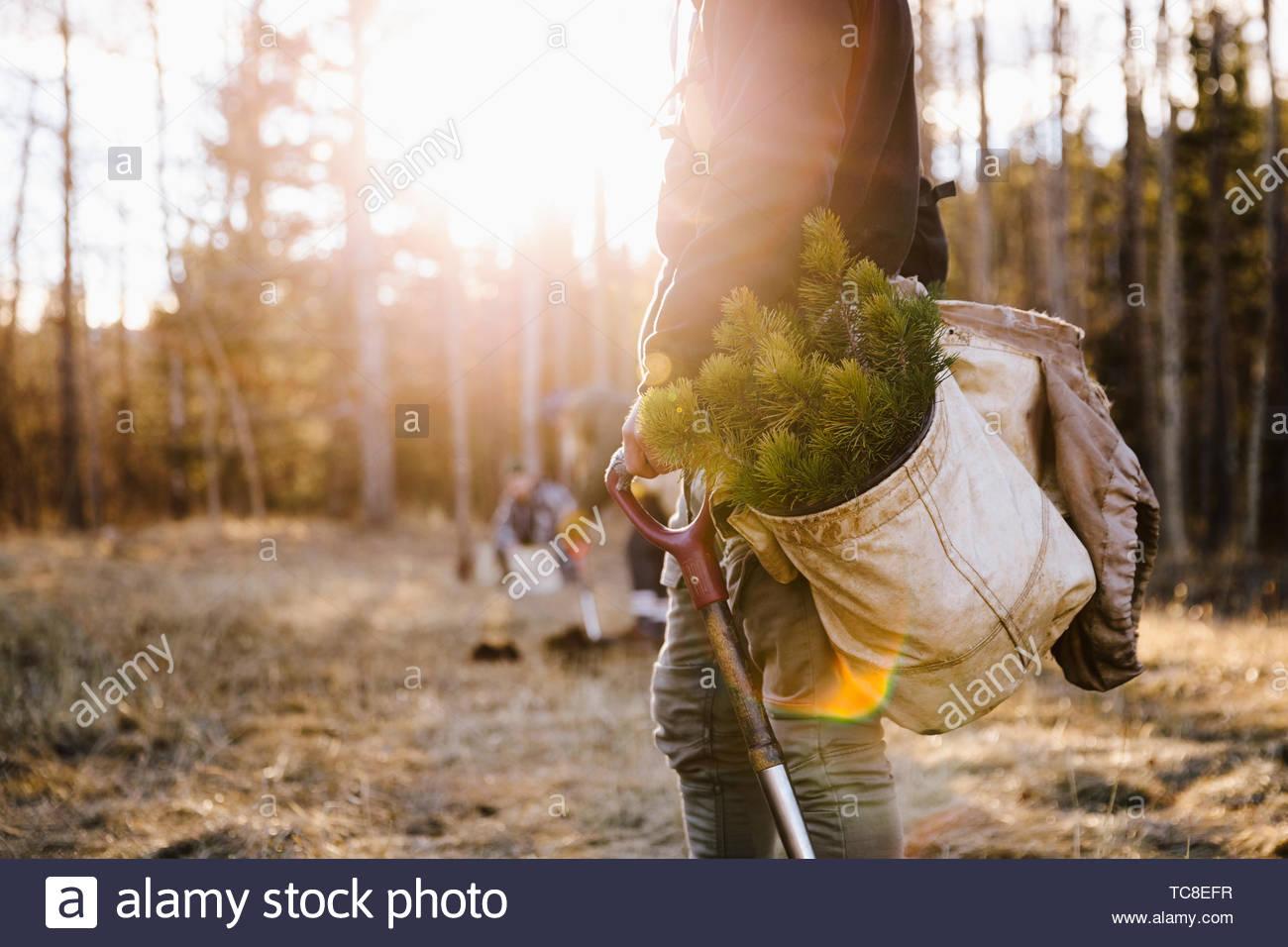 Los voluntarios la plantación de árboles en bosques soleados Imagen De Stock