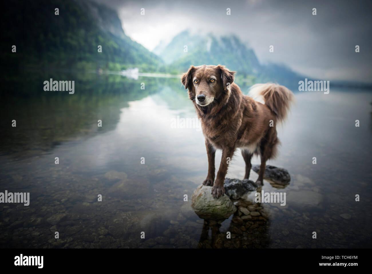 Perro en un bello paisaje. Perro en el lago entre las montañas. Viajar con el mejor amigo del hombre. Foto de stock