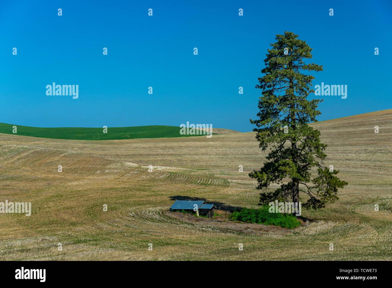 Colinas y campos de grano patrones del Palouse, Washington, EE.UU. Imagen De Stock