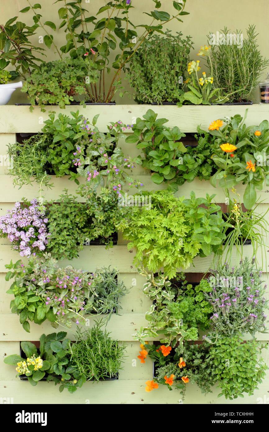 jardinera palets Jardinera De Palets Imgenes De Stock Jardinera De Palets