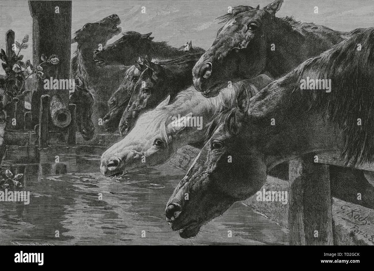 """'El abrevadero"""". Grabado a partir de un cuadro de Koch. La Ilustración española y americana, 30 de diciembre de 1882. Foto de stock"""