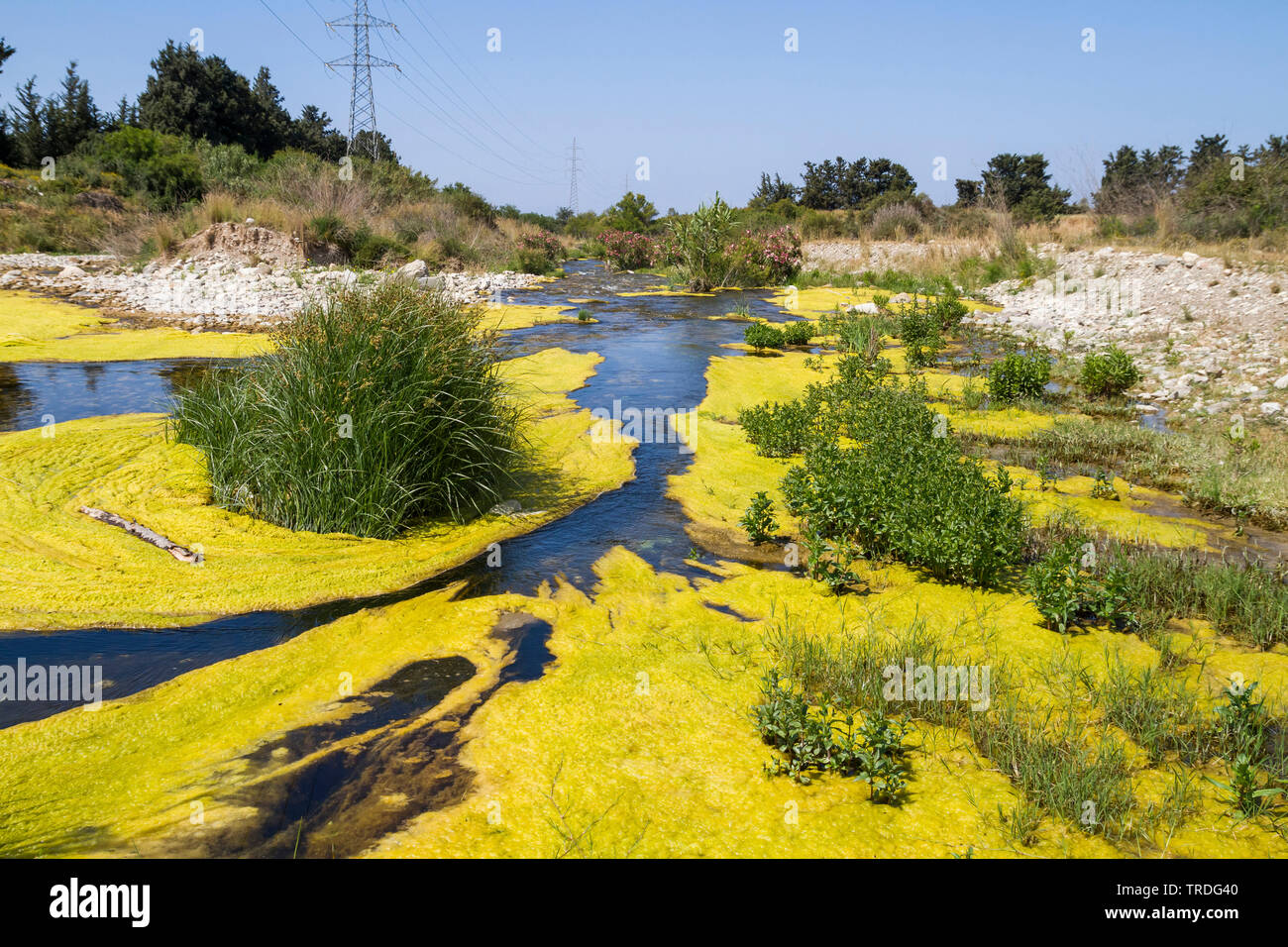 Verschmutzter, mit Algen bewachsener Fluss, Zypern | río eutróficos en Chipre, Chipre | BLWS503041.jpg [ c)/blickwinkel GAAM/R. Martin Tel. +49 (0) Foto de stock