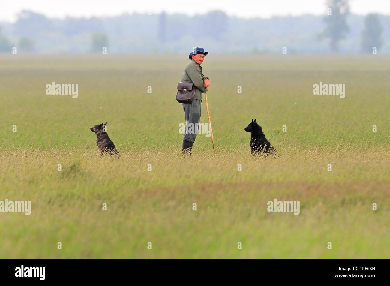 Perro doméstico (Canis lupus familiaris) f., vaquero con dos perros pastores, Hungría Foto de stock