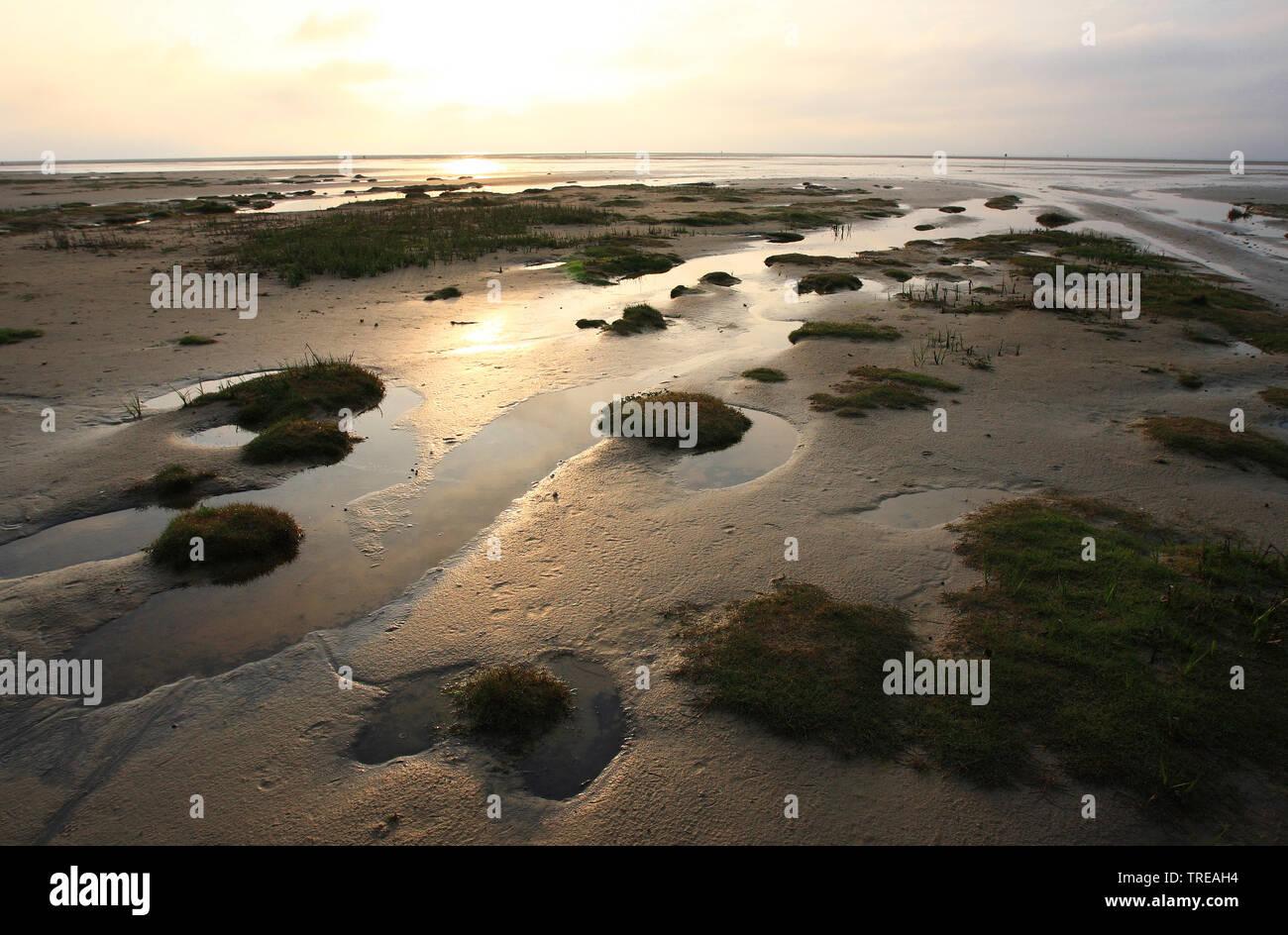 Schiermonnikoog durante la marea baja, los Países Bajos, Países Bajos, Schiermonnikoog Foto de stock