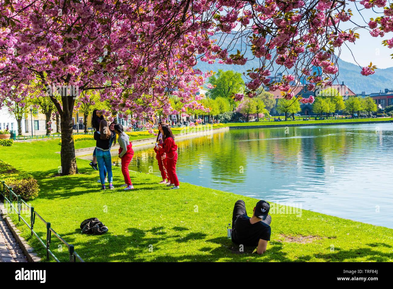 Parque de la ciudad de Bergen en plena floración Foto de stock
