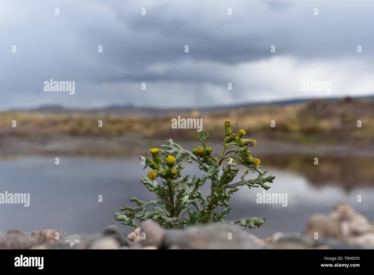 Un paisaje de un campo hermoso del altiplano, donde podrás ver hermosas imágenes para una revista, también puede ser utilizado para múltiples presentes Foto de stock