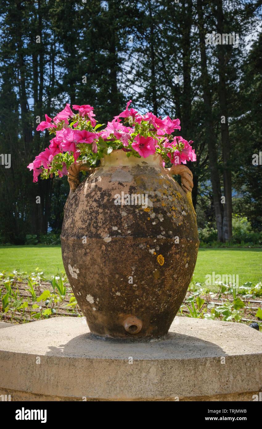 Villa Cimbrone Garden - una gran jarra de oliva estilo terracota maceta con rosa petunias Foto de stock