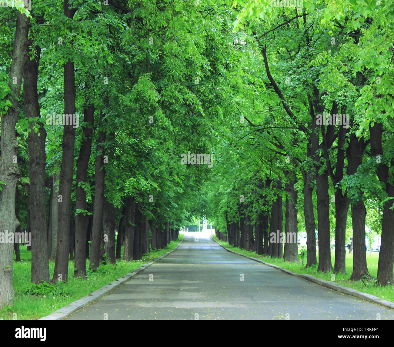 Park Road con árboles verdes y naturaleza del paisaje de verano Foto de stock
