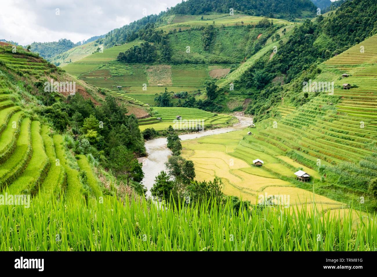 Vista De Los Campos De Arroz En Terrazas Fluviales Y En Mu