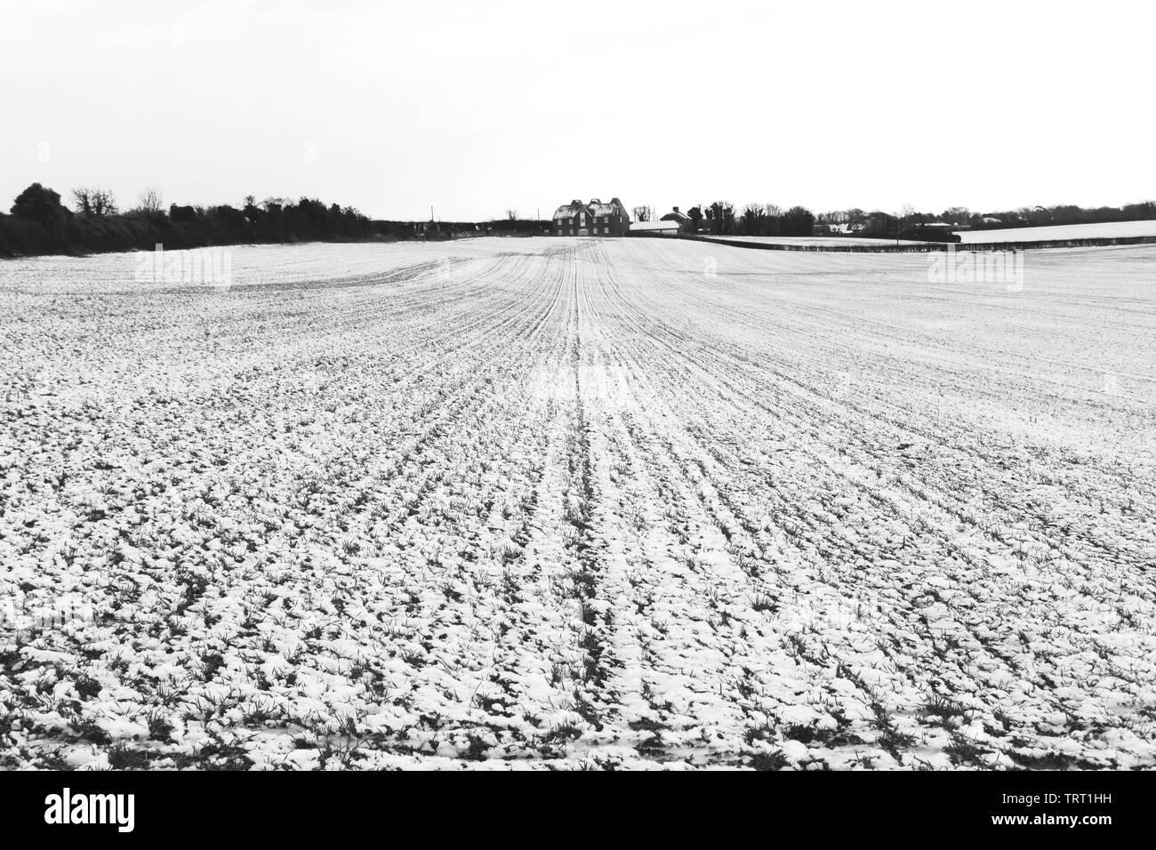 Los campos cubiertos de nieve fuera de Canterbury, Kent Foto de stock