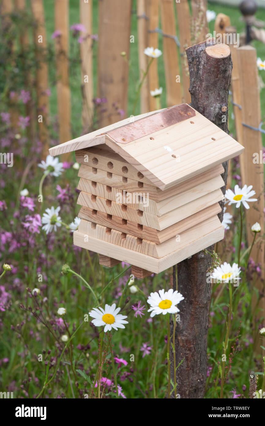 Cuadro de insectos situado en un jardín wildflower área para alentar a los insectos (fauna) en el jardín. UK Imagen De Stock