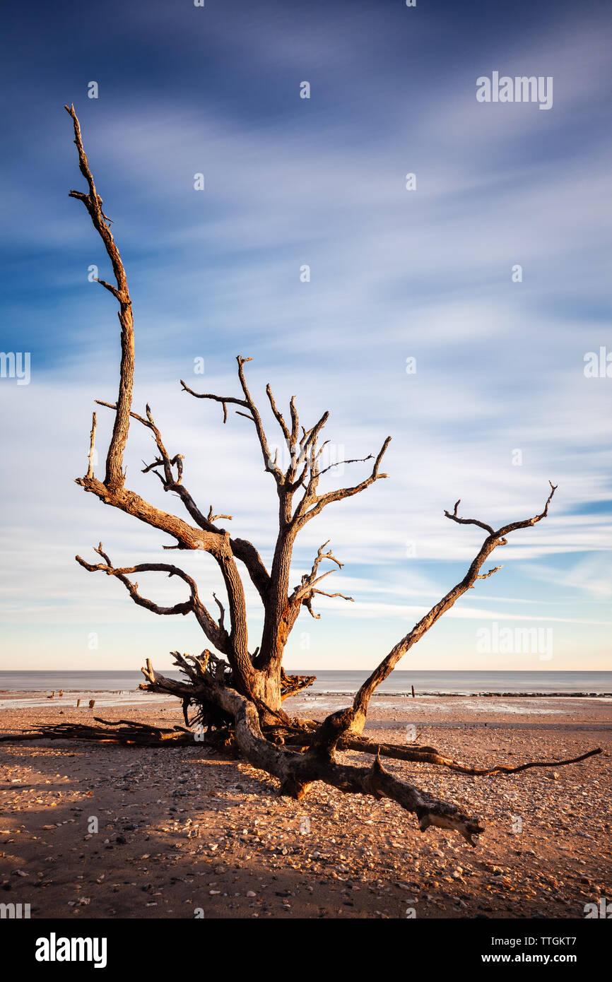La larga exposición imagen de Lone Tree en la playa, en la Bahía Botany, Edisto Island, SC, EE.UU. Foto de stock