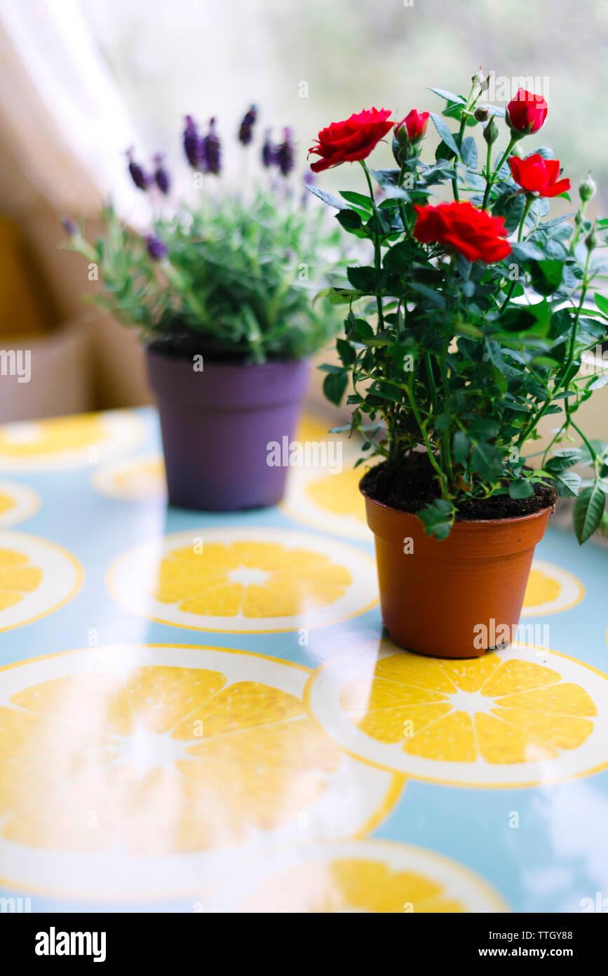 Rosa y lavanda flores nex a una ventana. Imagen De Stock