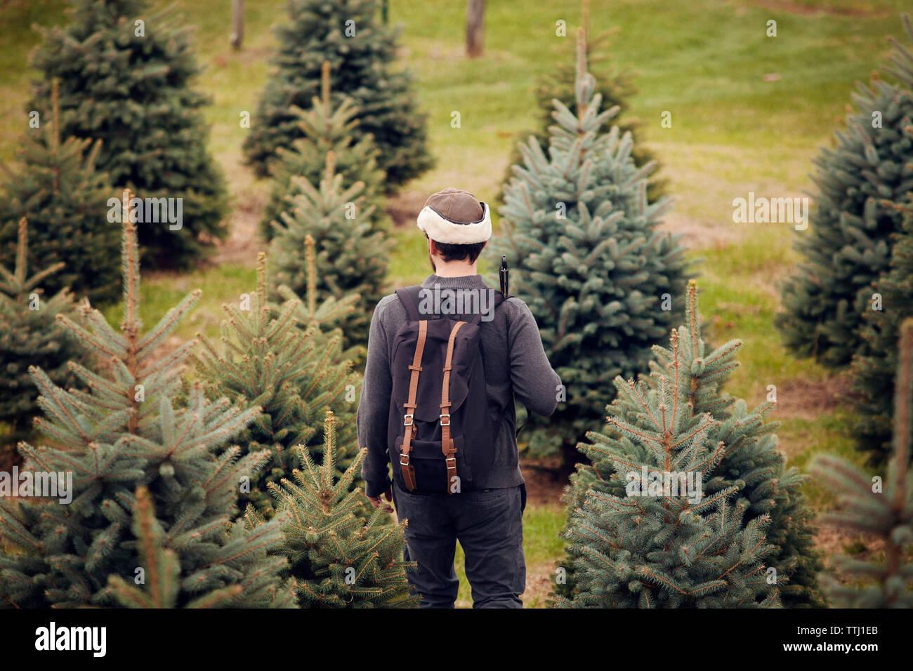Vista trasera del hombre con mochila caminando en Pine Tree Farm Foto de stock