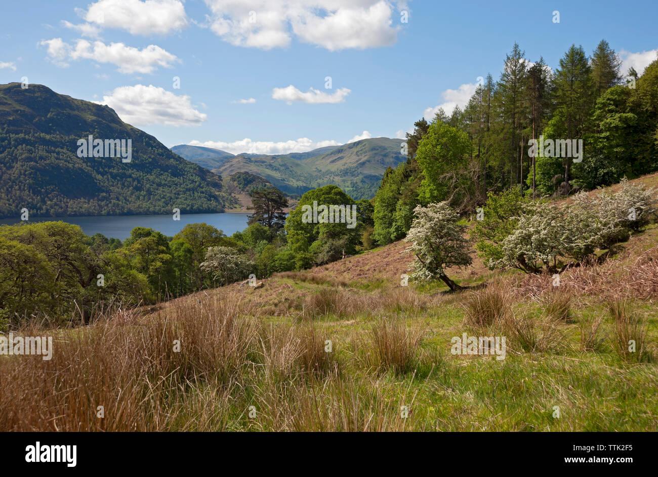Mirando a través de Ullswater hacia el lugar cayó el Parque Nacional del Distrito de los lagos de Cumbria Inglaterra Reino Unido GB Gran Bretaña Foto de stock