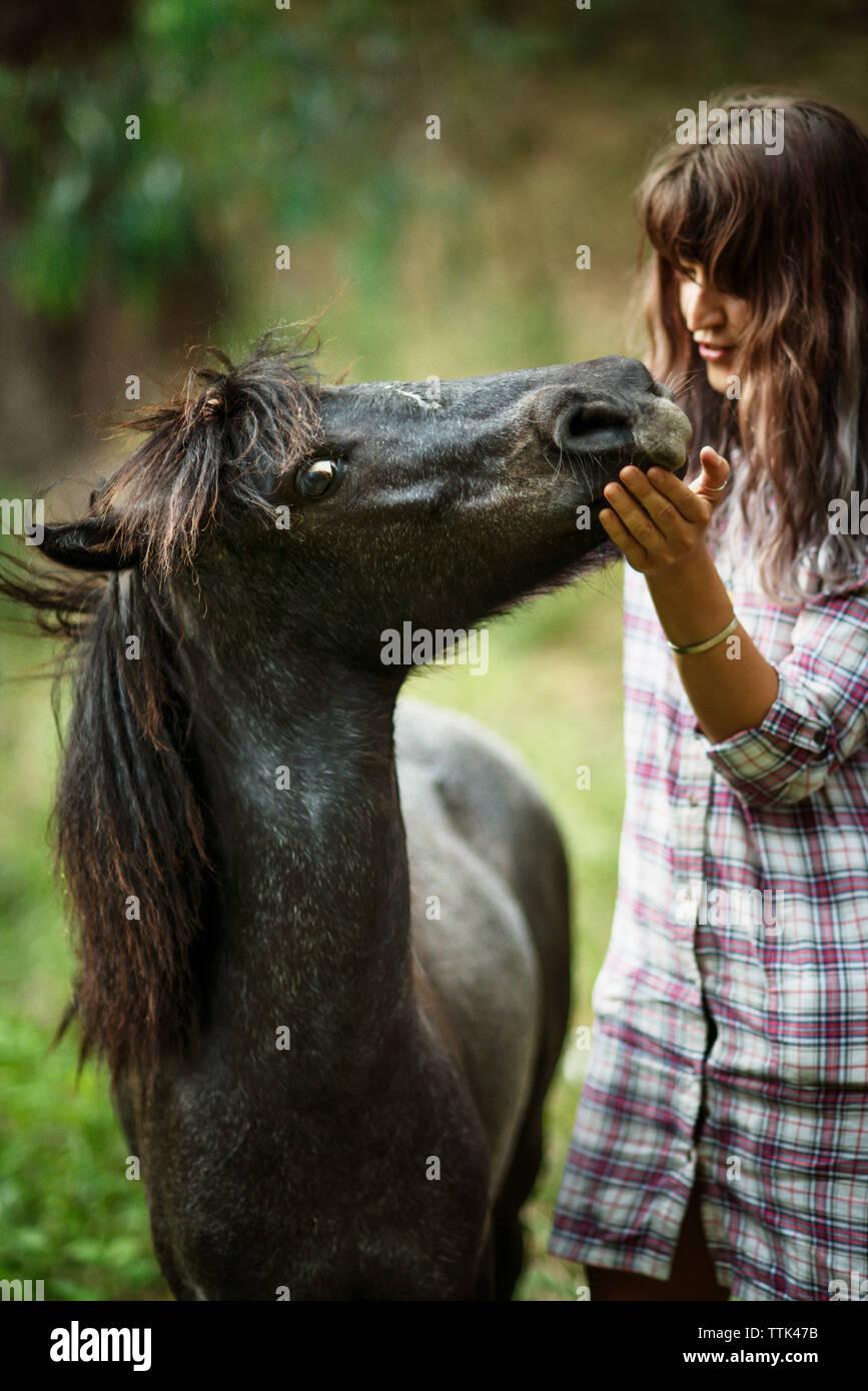 Mujer amante acariciando caballo mientras está de pie sobre el césped Foto de stock