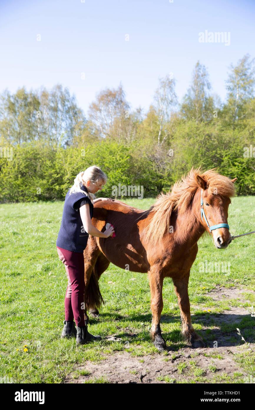 Vista lateral de la mujer caballo marrón cepillado estando de pie en el campo durante el día soleado Foto de stock
