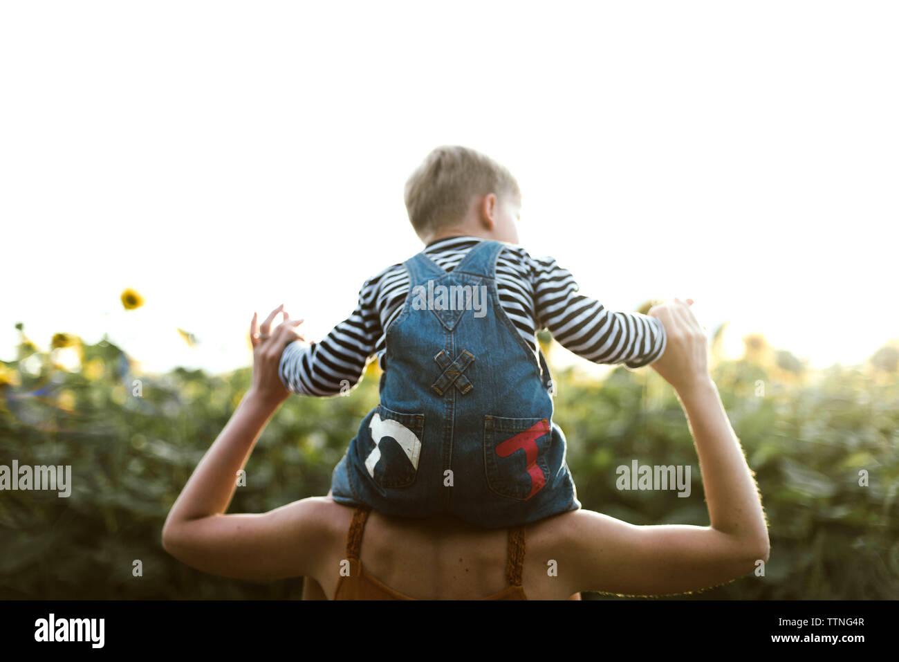 Vista posterior de un hijo sentado sobre los hombros de la madre en medio de girasol Foto de stock