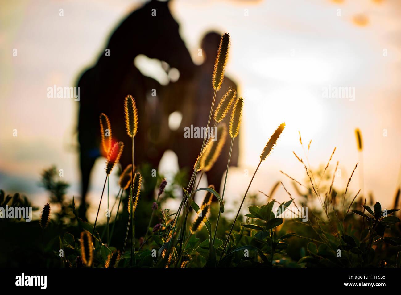Efecto de desenfoque de imagen de mujer a caballo en el campo durante la puesta de sol Foto de stock