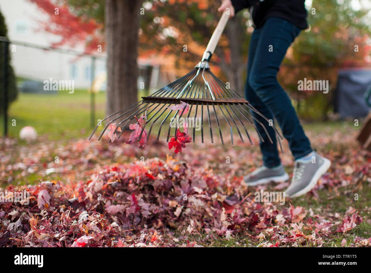 Pre jovencita haciendo quehaceres colorida rastrillar las hojas de otoño Foto de stock