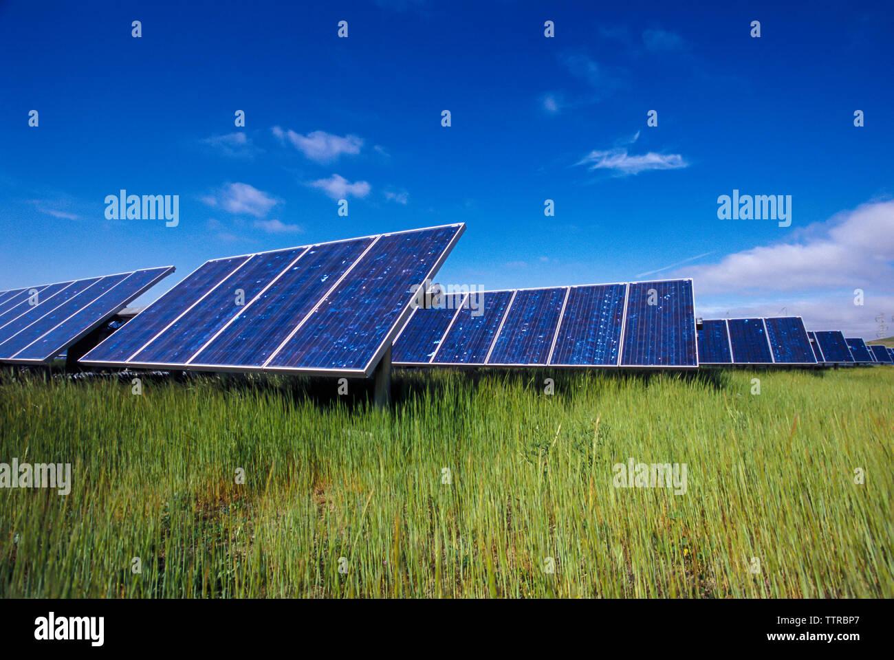 Paneles solares en campo de hierba contra el cielo azul Imagen De Stock
