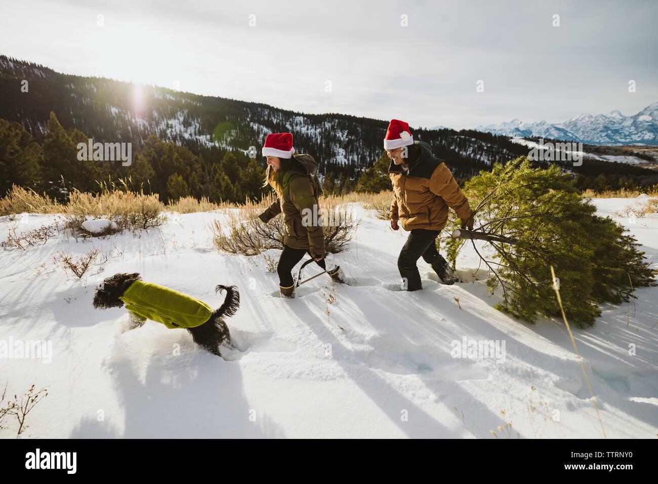 Perro a pasear y la tala de árboles de navidad en santa sombreros Foto de stock