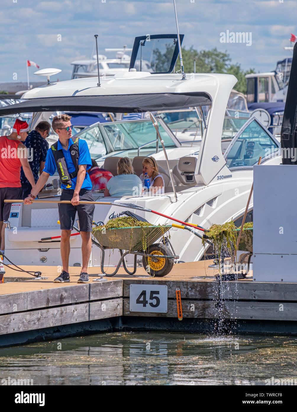 Joven trabajador masculino borra las malas hierbas de los resbalones del barco en el puerto de Orillia para impedir que las hélices del barco de ser intercambiadas. Foto de stock