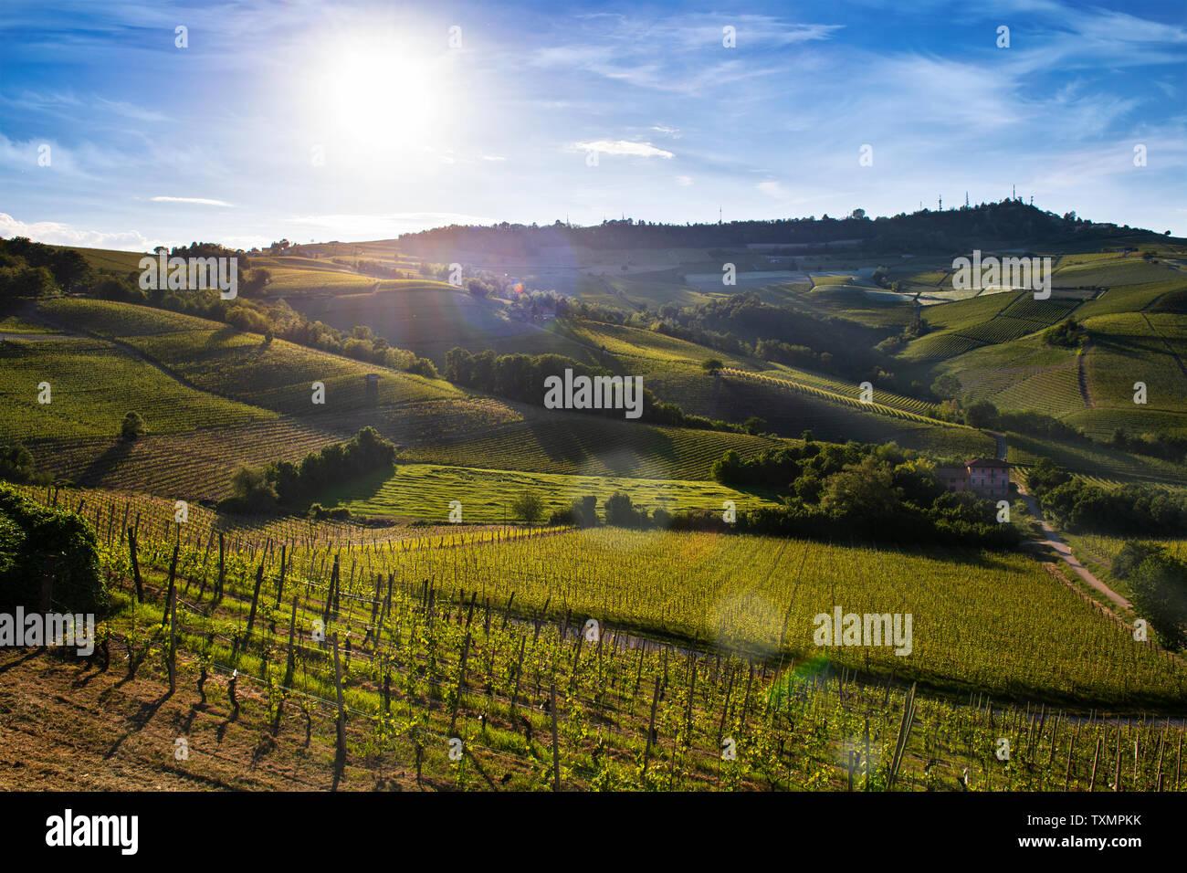 Maravillosos viñedos y bosques en la ladera Sarmassa ubicada en el municipio de Barolo Piedmont Italy, el cielo es azul con nubes preciosos Foto de stock