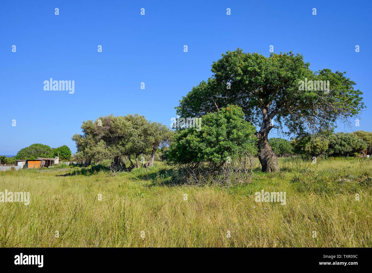Gran árbol verde en un campo con un cobertizo en el lado izquierdo y un cielo azul sin nubes Imagen De Stock