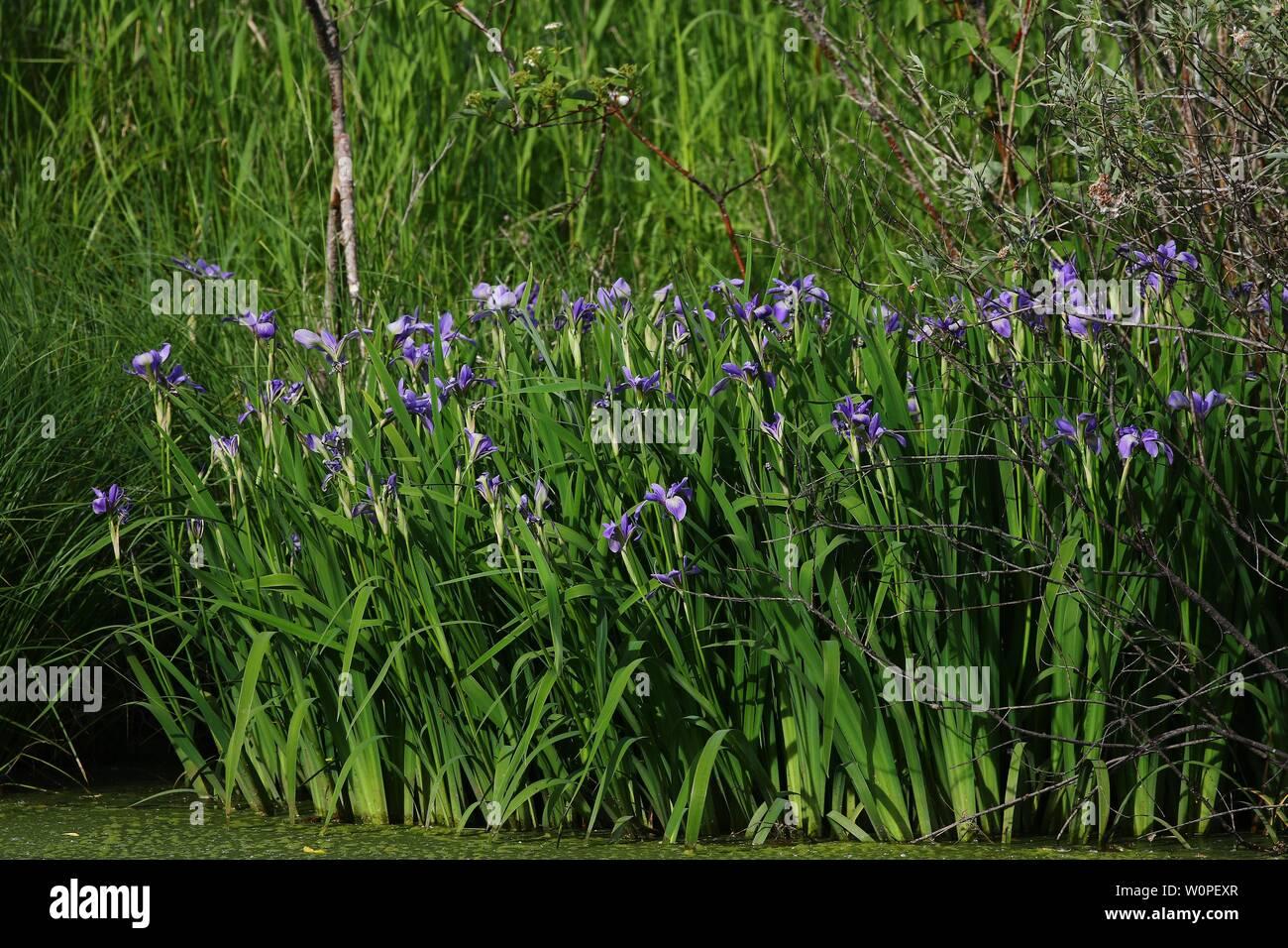 Iris Mythology Imágenes De Stock Iris Mythology Fotos De